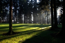 Afternoon sunlight passing through tress.