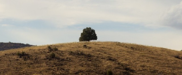 This is a tree on a hill as seen from the Mt. Shasta view point on Interstate 5 southbound.