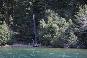 This is a small beach and a dead tree.