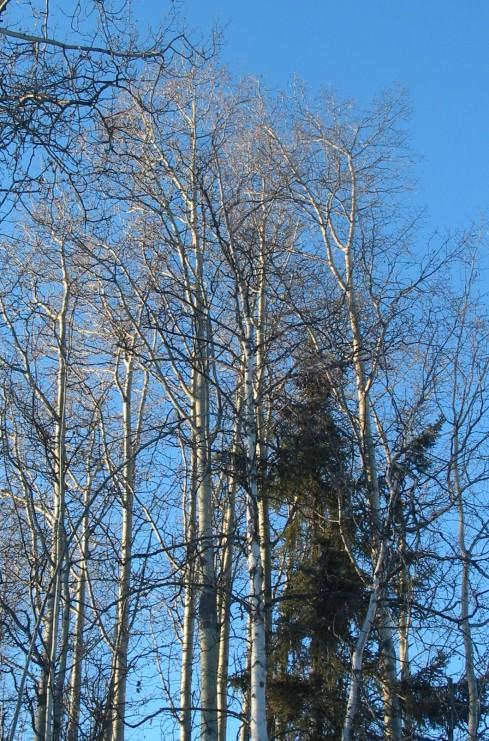 tree_group