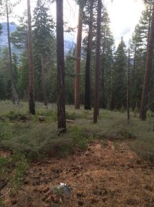 A field of Sage near Fallen Leaf Lake.