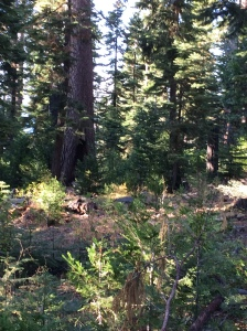 Here are some trees and saplings near I was staying at in fall 2014.