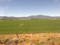 This is a field of food in California.