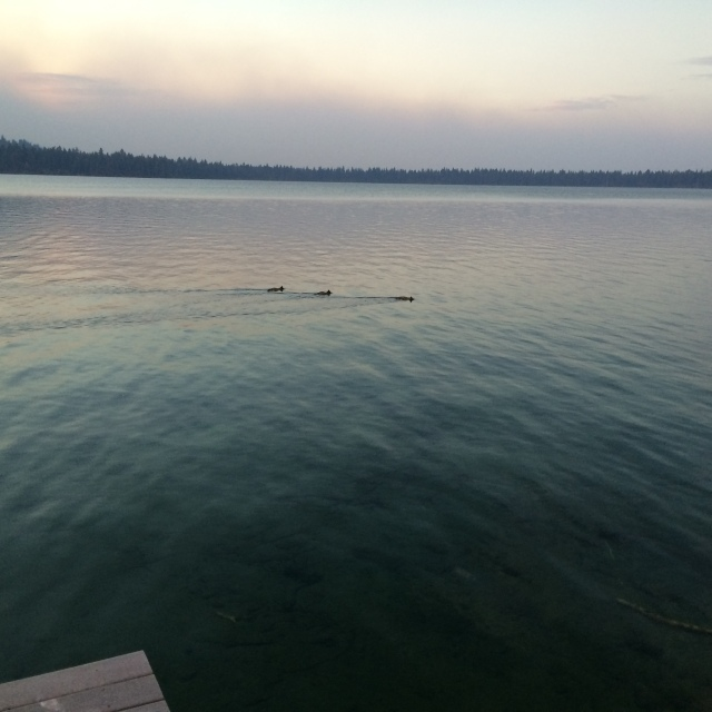 Here are 3 ducks on a lake that was taken in the evening.