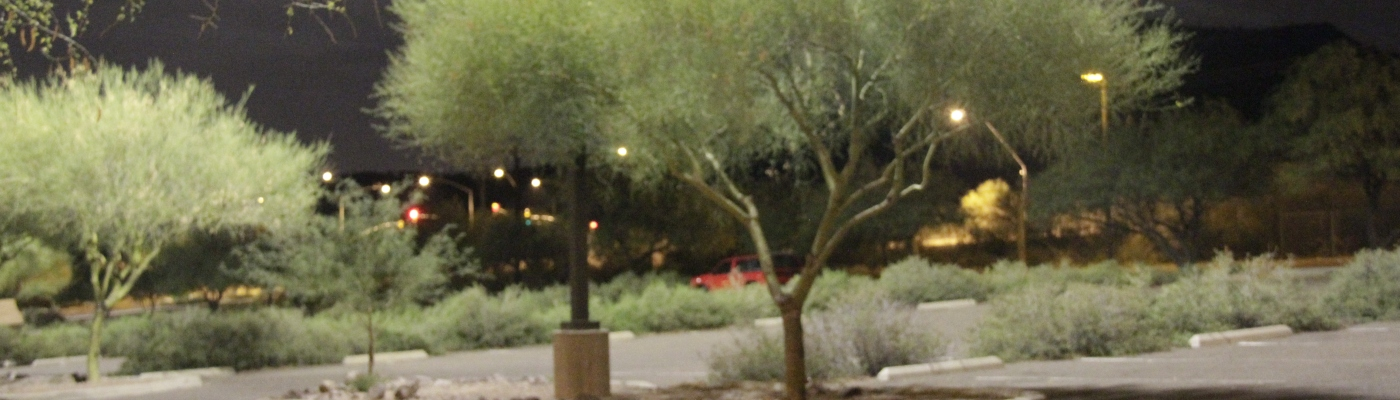 Here is a tree below a parking lot light in Tucson, Arizona.
