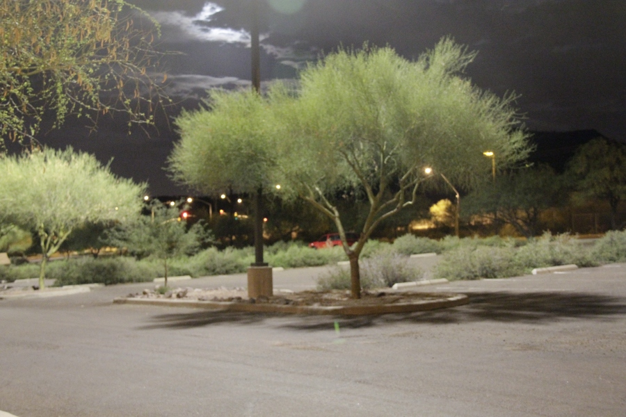 Here is a tree below a parking lot light in Tucson, Arizona.