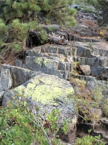 Multi level Rocks with foliage.