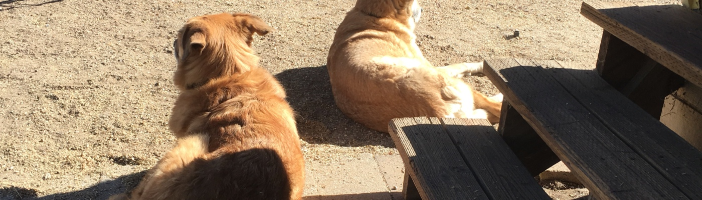 Here is Rogue and Lolo with their backs to me while sunbathing.