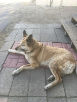 Here is Lolo laying down in front of the porch steps while in the shade.