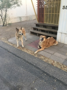 Here is Lolo and Rogue standing outside of my place before taking a walk.